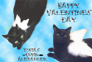 Happy Valentines Day by cat-lovers