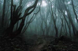 .:Welcome To The Clouded Forest:. by StalkYouInShadows