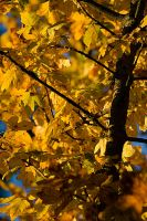 12 Nov 10 Autumn Colors I by urnightmare