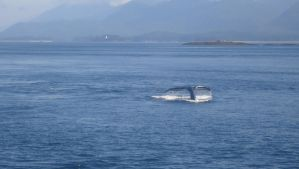 Whale Watching by Jess2Lucky