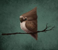 Little Bird by adailey