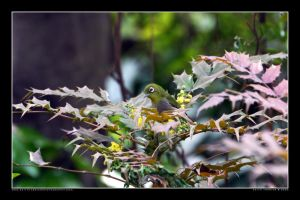 White-eye in the Park 5 by Keith-Killer