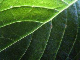 Leaf texture by TCJstock