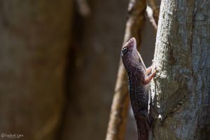 Brown anoles are everywhere by CyclicalCore