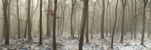 Czulow winter forest pano by kla91