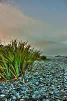 Flax at the Beach by Mikelyjohnsono