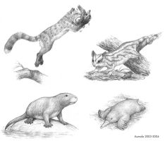 The Speculative Mammal Project by Osmatar
