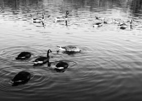 Quackers III. by BamBamKia