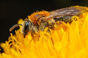 Mining Bee by snomanda