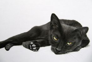 Pastel drawing Black Cat by mo62