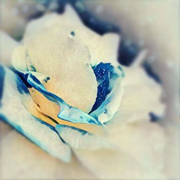 Blue And White Rose by endomentalArtistry