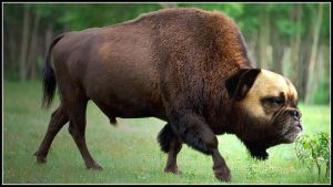 bison dog .. by fisher57