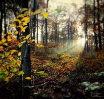 Fall by filth666