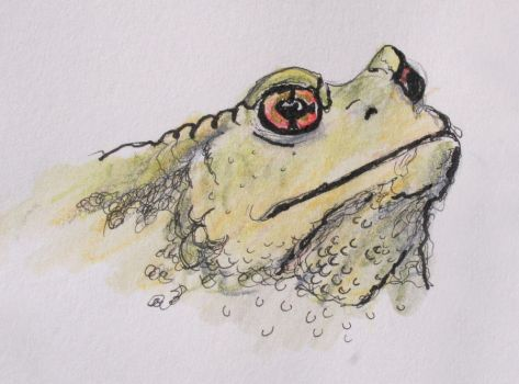 Toads have AMAZING eyes by cerimair