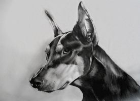 Doberman by Cayasha