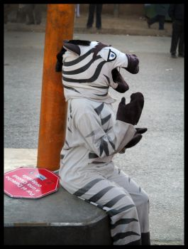 Zebra by sammib