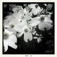 Dogwood by ZandyPop