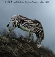 Zebra Cliff by RemorseHP
