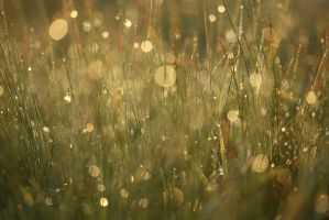 morning dew by zielony-motyl