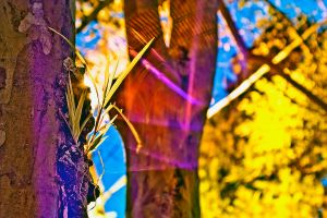 Expressionistic Color 3 by linde-lazer