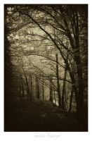 austrian trees 7 by sorny