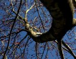 Spiral Branch by Sirplough