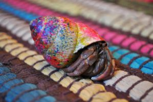 Sprinkles the Hermit Crab by Les-Etoiles