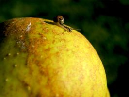 there is a SNAIL on my apple by Makaabre