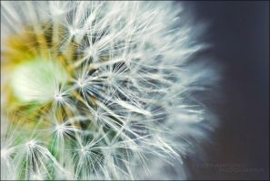 Blow Me by Katerina423