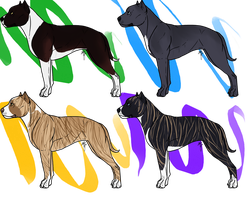 Gamebred Pit Imports by Obiettivo-Kennel