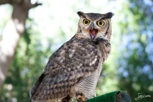 hello mr. Owl! part two by JuanChaves
