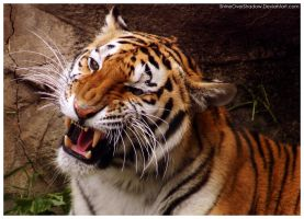 Amur Tiger 035 by ShineOverShadow