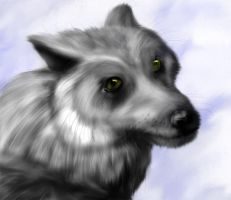 White Wolf by theworldiveknown