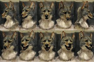 Coyote head. by Crystumes
