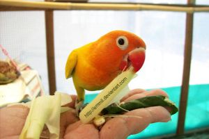 Palma eating on my hand by emmil