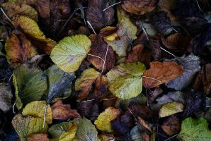 leaves by awjay