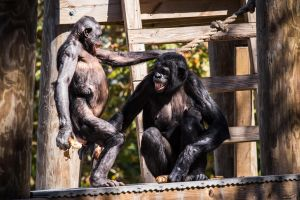 Monkey Business 2 by 904PhotoPhactory