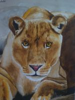Lioness by MichaelObikel