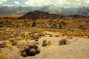 Barrel Cactus, Alabama Hills by shubat