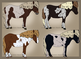 Shetland pony adoptables by ForeignFrontierRanch