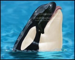 Shamu portrait by namu-the-orca