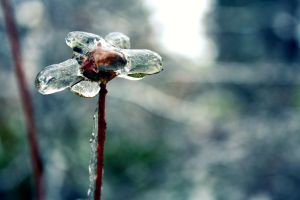 Ice Flower by Emillemily