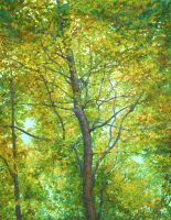 Autumnal radiant tree by AldemButcher
