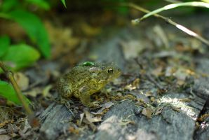 Toad Stock 3 by Swicago