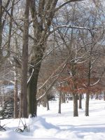 Lanscape: winter 07 by CotyStock