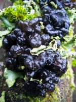 Black Witches Butter by iriscup