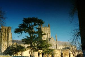 Cedar and Cathedral by EarthHart