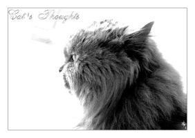 Vlad.. Cat's Thoughts by montex
