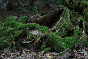 Rotten Trees No. 4 by Amaries-stock