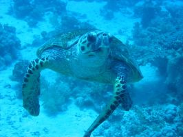 turtle by lindaatje